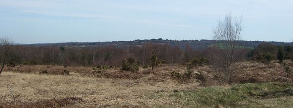 Kings Standing, Ashdown Forest, East Sussex viewed from near Colemans Hatch Road photo Dartford Warbler